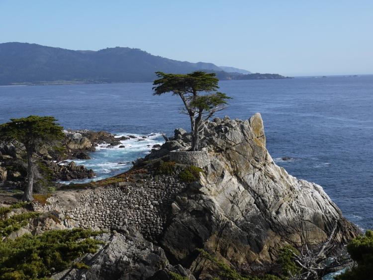 Lone-Cypress-Tree